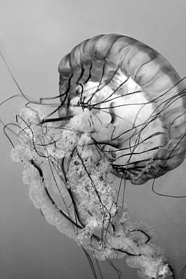 Photograph - Dancing Jellyfish Bw by Bonnie Follett