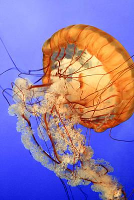 Photograph - Dancing Jellyfish Photo by Bonnie Follett