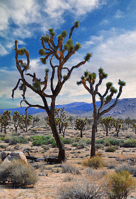 Photograph - Dancing Joshua's - Joshua Tree National Park by Glenn McCarthy