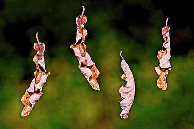 Photograph - Dancing Leaves by Michael Mogensen