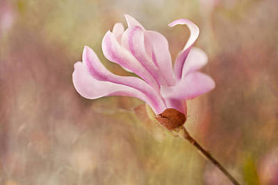 Photograph - Dancing Magnolia by Mary Jo Allen