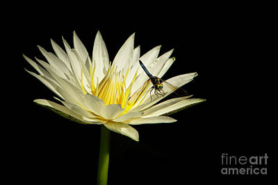 Photograph - Dancing On A Water Lily by Sabrina L Ryan