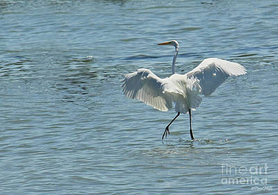 Photograph - Dancing On Water by Terri Mills