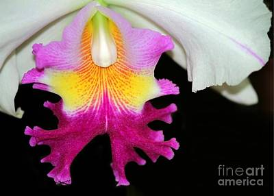 Photograph - Dancing Orchid by Sabrina L Ryan
