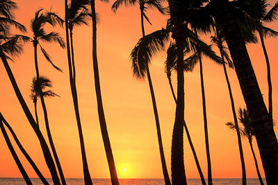 Photograph - Dancing Palms by Don Schwartz