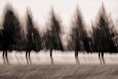 Impressionistic Photograph - Dancing Pines by Carol Leigh
