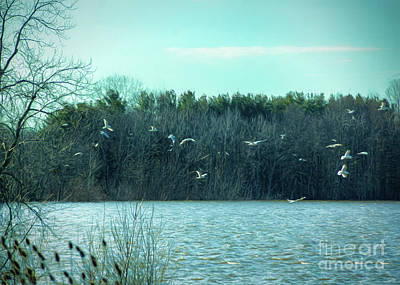 Photograph - Dancing Seagulls by Janice Rae Pariza