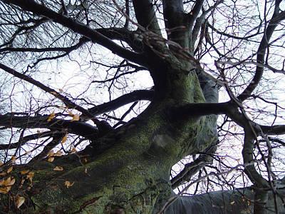 Cummington Photograph - Dancing Tree by Rosemary Wessel