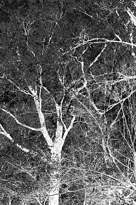 Photograph - Dancing Trees Gray by Lesa Fine