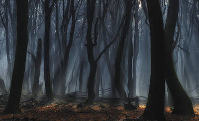 Sinister Photograph - Dancing Trees by Jan Paul Kraaij
