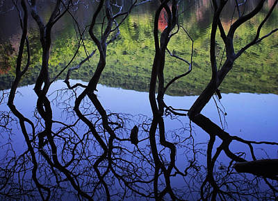 Photograph - Dancing Trees by Jessica Tabora
