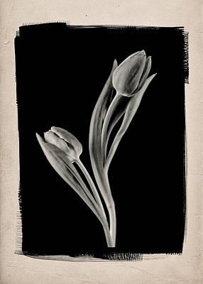 Dining-room Photograph - Dancing Tulips B by Patrick Chuprina
