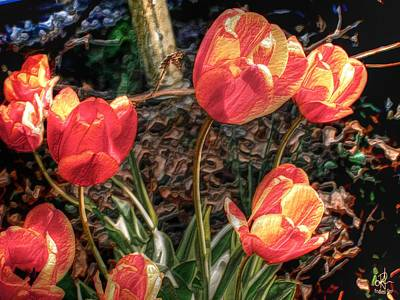 Photograph - Dancing Tulips by Pennie  McCracken