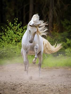 Photograph - Dancing White Horse by Ekaterina Druz