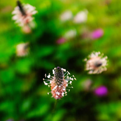 Photograph - Dancing Wildflowers - Square by Chris Bordeleau