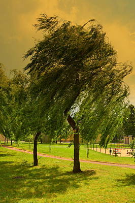 Photograph - Dancing Willow by Henryk Gorecki