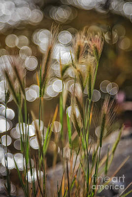 Food And Flowers Still Life Rights Managed Images - Dancing with Light on the Water Royalty-Free Image by Mitch Johanson