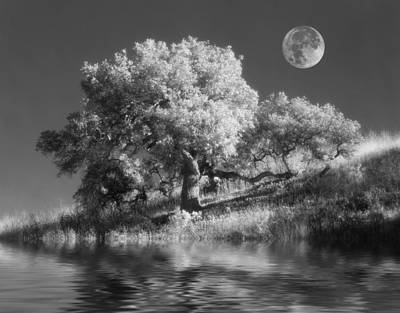 Western Photograph - Dancing With The Moon by Jerry McElroy