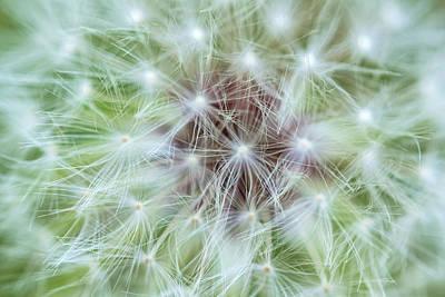 Photograph - Dandelion Abstract by Jonathan Nguyen