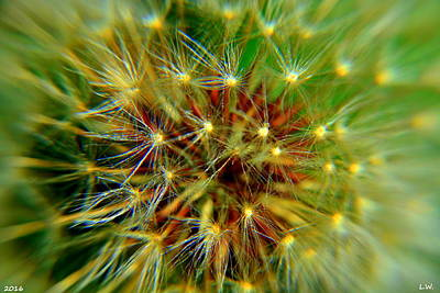 Photograph - Dandelion After by Lisa Wooten