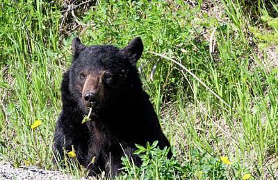 Photograph - Dandelion Bear by Louise Magno