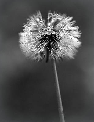 Photograph - Dandelion - Black And White by Joseph Skompski