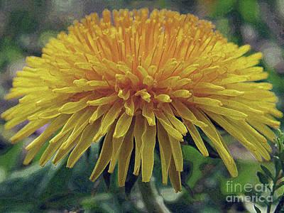 Photograph - Dandelion Bloom by Kim Tran