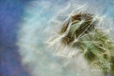 Photograph - Dandelion Blues by Lisa Cockrell