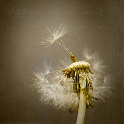 Photograph - Dandelion Clock by Ian Barber