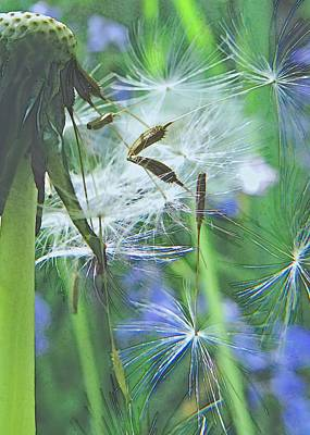 Photograph - Dandelion Dance Of Light by I'ina Van Lawick