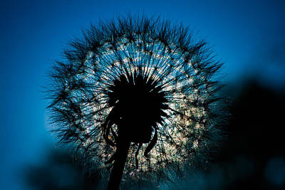 Art Print featuring the photograph Dandelion Dream by Jason Moynihan