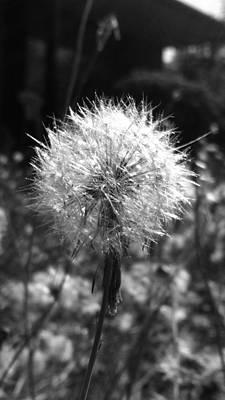 Photograph - Dandelion  by Eddie G