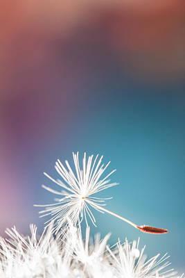 Photograph - Dandelion by Elena E Giorgi