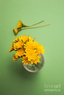 Colorful Dandelions Photograph - Dandelion Flower Clippings by Jorgo Photography - Wall Art Gallery