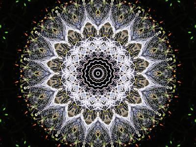 Photograph - Dandelion Fluff Manipulation by Karen Stahlros