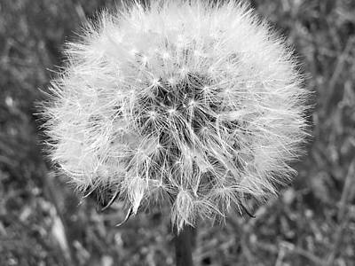 Travel - Dandelion Fluff by Shelly Dixon