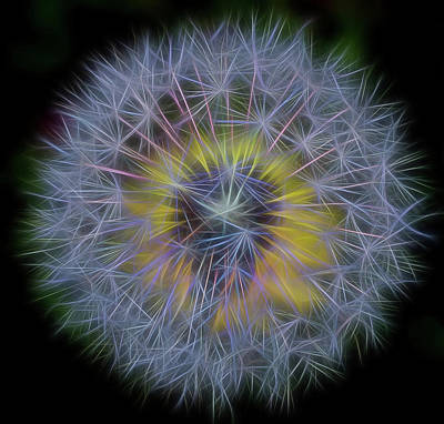 Photograph - Dandelion Glow II Square by Terry DeLuco