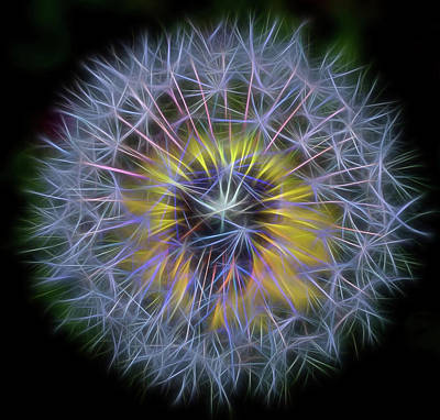Dandelion Glow Square Art Print by Terry DeLuco