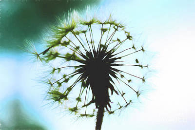 Photograph - Dandelion Halo by Kay Brewer