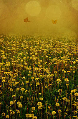 Photograph - Dandelion Happiness by Emily Stauring
