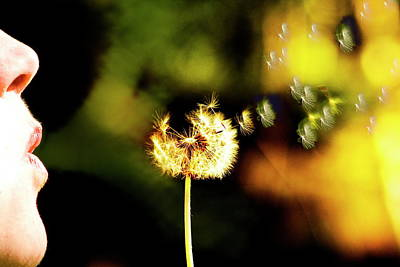 Wild And Wacky Portraits Rights Managed Images - Dandelion Heart  Royalty-Free Image by Monte Arnold