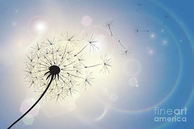 Natural Abstract Photograph - Dandelion In A Summer Breeze by Jane Rix