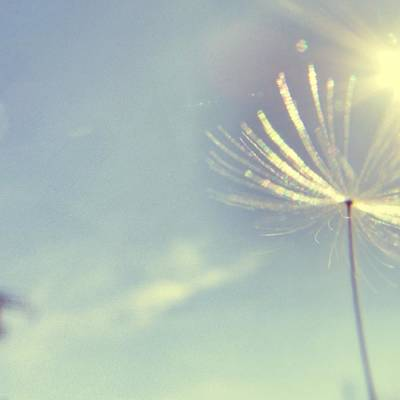 Photograph - Dandelion In The Air by Marianna Mills