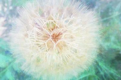 Snowfall Mixed Media - Dandelion In Winter by Terry Davis