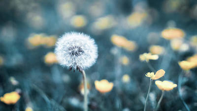 Photograph - Dandelion by James Billings