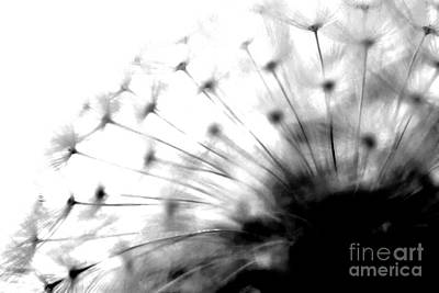 Photograph - Dandelion  by Kenny Glotfelty