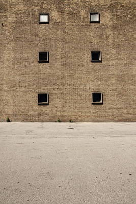 Biege Photograph - Dandelion by Kreddible Trout