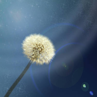 Photograph - Dandelion Magic by Judy Vincent