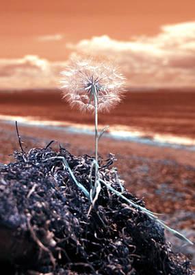 Photograph - Dandelion Moments by Rebecca Parker