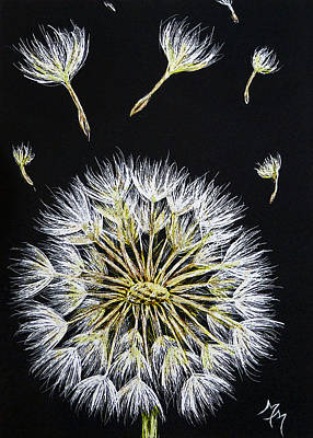 Drawing - Dandelion by Monique Morin Matson